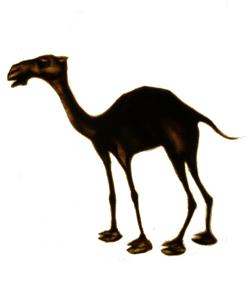 | camel | 2006