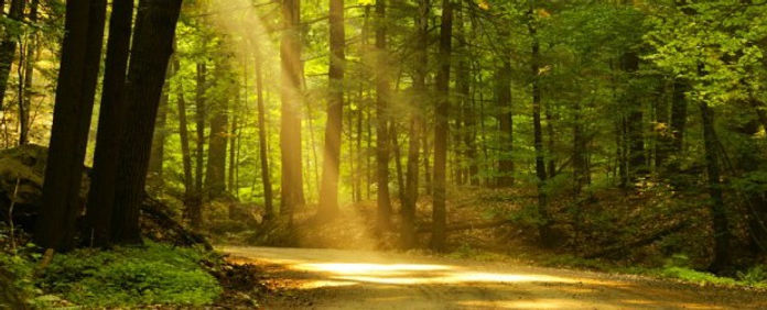 Sun in forest.jpg