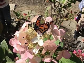 Preschool: Butterfly Wonder