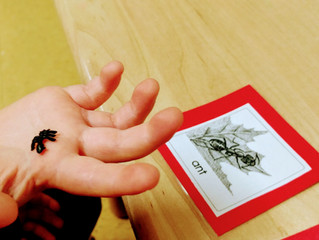 Seedlings: Montessori Sensitive Period for Small Objects