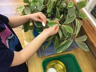 Pre-Primary: Leaf Polishing…