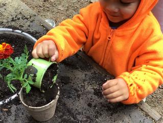 Seedlings:  Springtime Planting