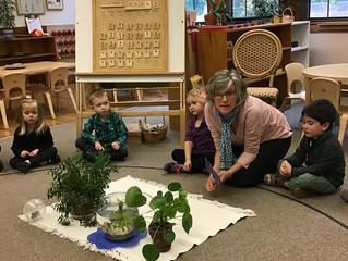 Preschool: Plants and Animals