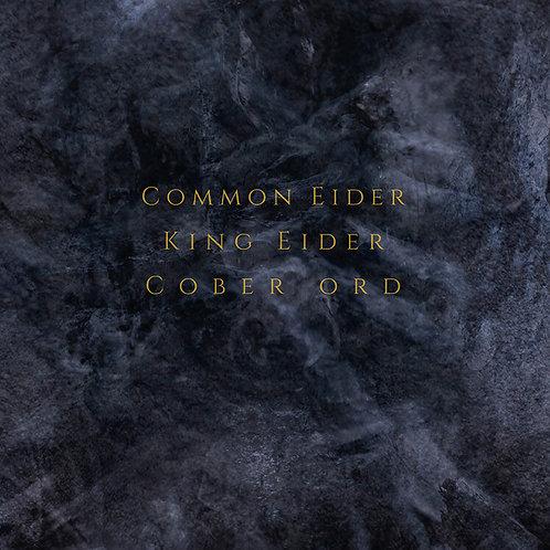 COMMON EIDER, KING EIDER / COBER ORD - Palimpseste  [CD]