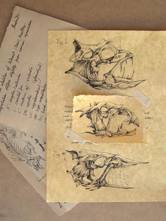 Field Journal_Fish