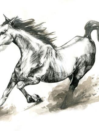 Horse Detailing