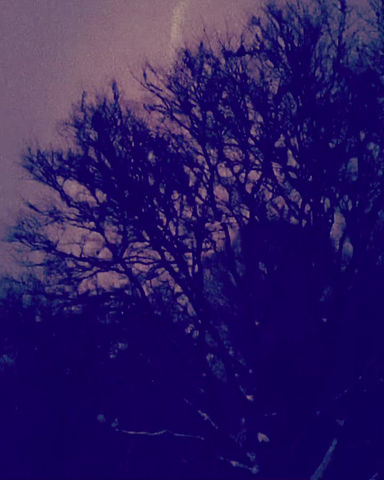 The Night Was Bright