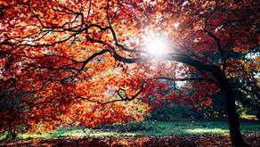 Going Deep Into Fall