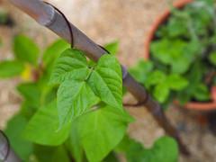 Potager en permaculture