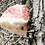 Thumbnail: red belted polypore mushroom