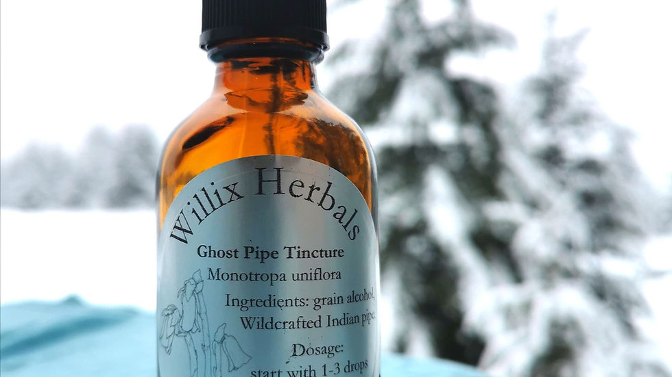 Ghost pipe tincture