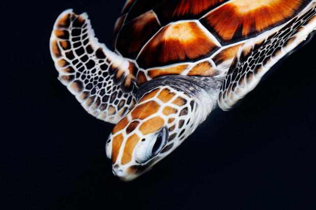 World Turtle Day: The plight of the turtle and tortoise