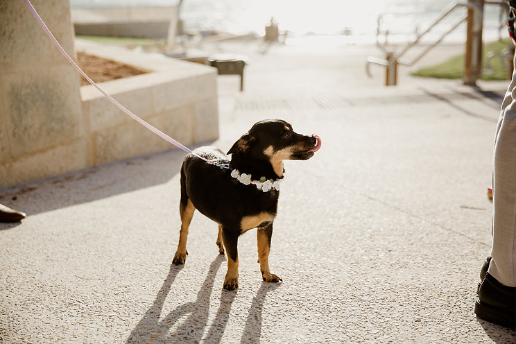 Sally Bruce Celebrant Perth Dogs at Wedd