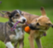 Dog Day Care - South Croydon