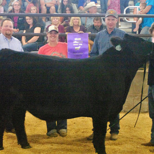 "BOX ELDER COUNTY FAIR - ""2021 BEJL Market Beef Show: ""Grand Champion goes to Garrett Smith!"""