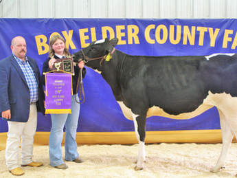 "BOX ELDER COUNTY FAIR - 2021 BEJL Dairy Heifer Show: ""Macie Gardner earns Grand Champion"""