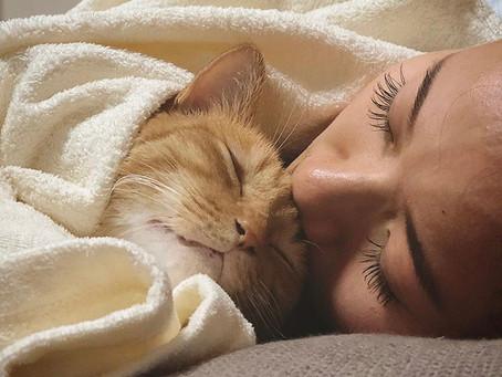 ペットではなく愛する家族がテーマ
