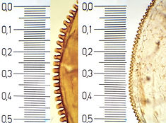 OSW from 12 Urban Entomology.jpeg