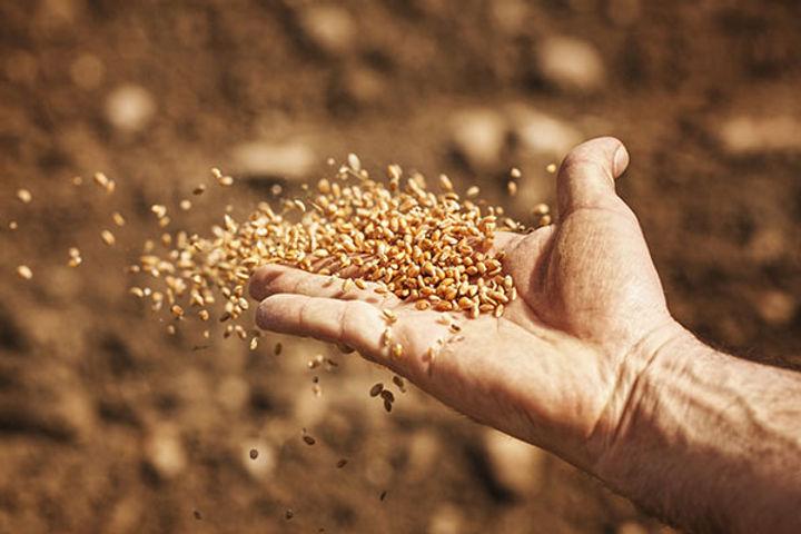 La parabole du semeur