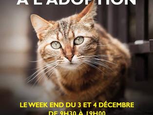 Adoptions de chats et chatons, collecte au magasin Truffaut de saint Denis, les 3 et 4 décembre 2016