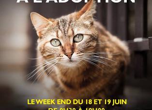 Adoptions Chats Truffaut Saint-Denis