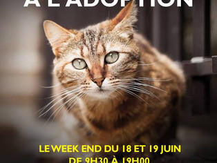 Adoptions Chats Truffaut Saint-Denis