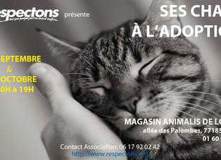 Adoptions de chats et chatons, collecte samedi 30 septembre et dimanche 1er octobre