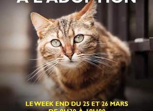 Adoptions chats et chatons, collecte, 25 et 26 mars 2017, au magasin Truffaut de Saint Denis