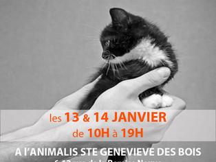 Adoptions chats et chatons, collecte de nourriture, samedi 13 et dimanche 14 janvier 2018