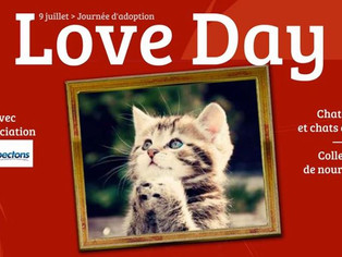 Adoptions chats et chatons samedi 9 juillet