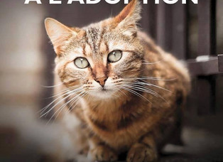 Adoptions chats et chatons samedi 2 juillet