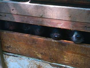 """"""" L'association de protection animale Respectons (association de protection animale) se mobilis"""