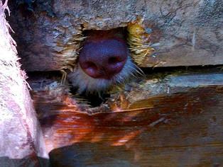 Sauvetage de 15 chiens supplémentaires dans le cadre des 150 chiens en Bosnie