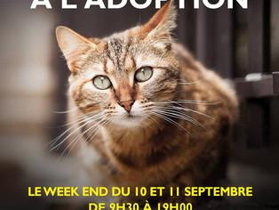 Adoptions de chats et chatons, collecte ce samedi 10 et 11 septembre