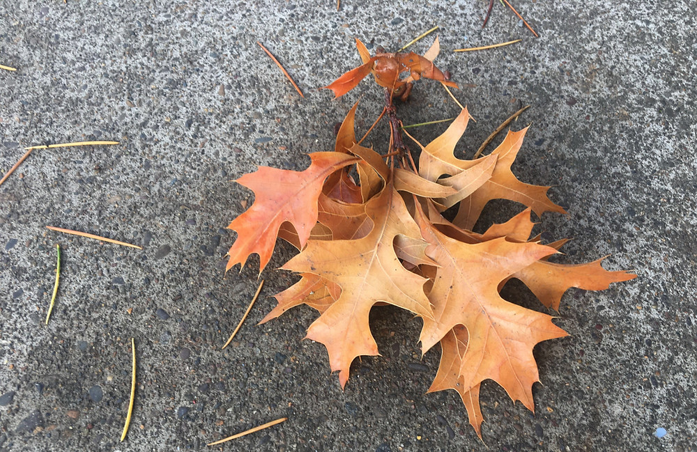 Autumn leaves on concrete