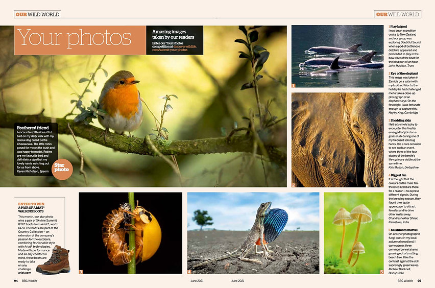BBC Wildlife magazine June 2021