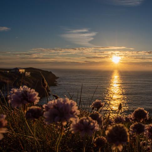 Cornish sunset wildflowers coast