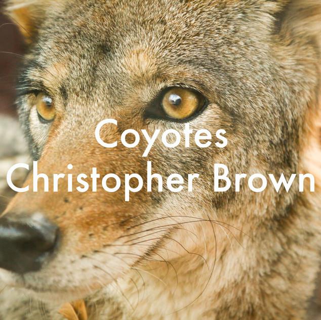 coyotes.jpg