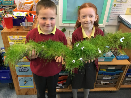 Green fingers in Rabbits class
