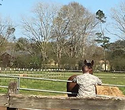 The horse whisperer 🐴