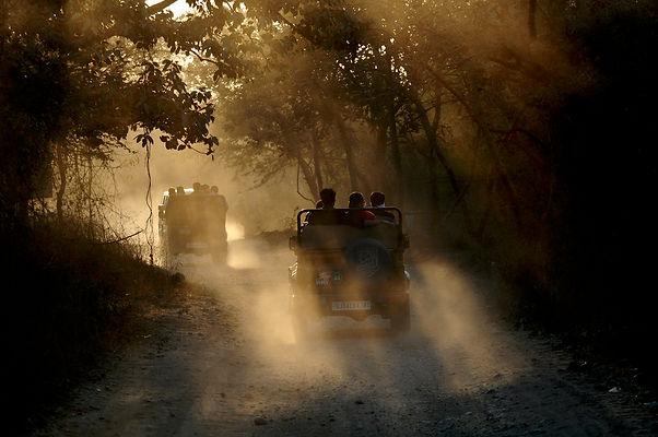 Safari Sunset.jpeg