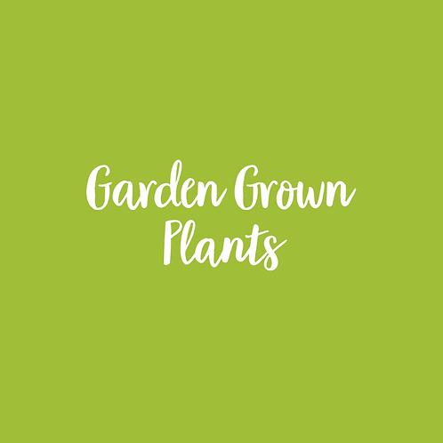 GARDEN GROWN | PLANT FONT & ART