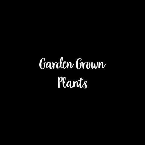 Garden Grown Plants Font & Vector Art - 1 User