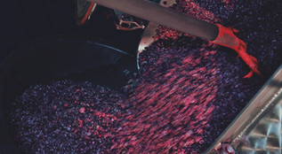 Domaine Bertagna Pinot grapes