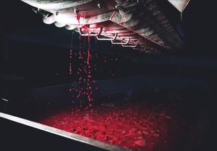 Domaine Bertagna Wine Pressing
