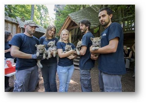 L'équipe animalière avec 3 mâles et 2 femelles louveteaux