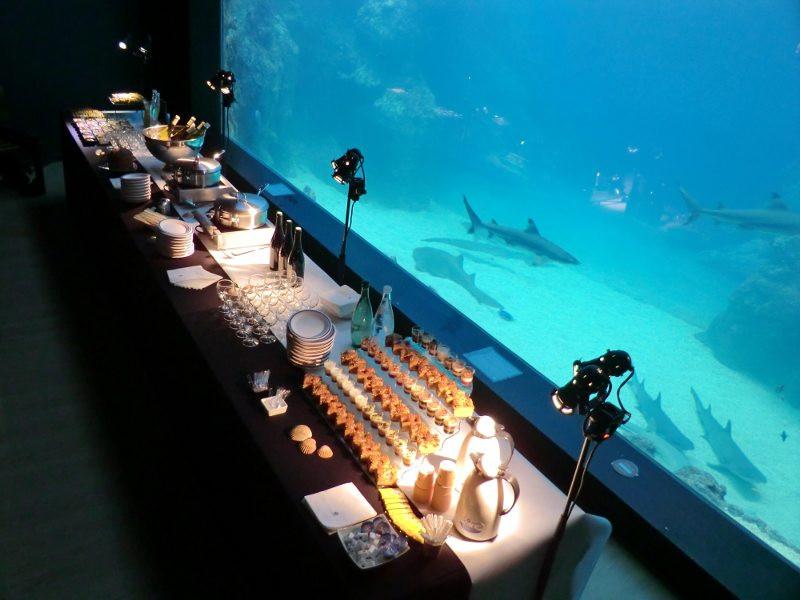 Un buffet devant l'aquarium