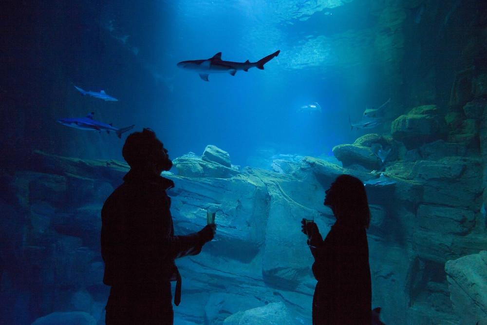 Un couple observe un requin au fond de l'eau