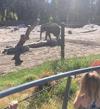 Zoo field trip.jpg