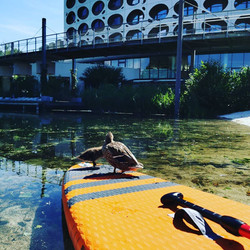 SUP Lagune Seeparkhotel Klagenfurt